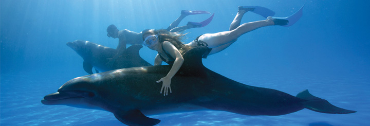 Swim and Ride with Dolphins